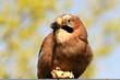 Vogel mit Futter