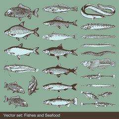 Vector set: fish, shells and seafood