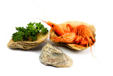 Composition of Shrimps with greenery in the shells of oyster poster