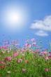 canvas print picture - summer flowers