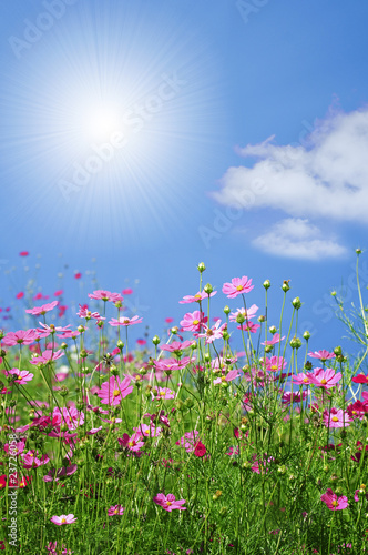 canvas print picture summer flowers
