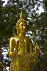 Buddha statue in forest of Thailand