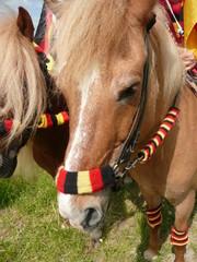 Fußball WM zu Pferd