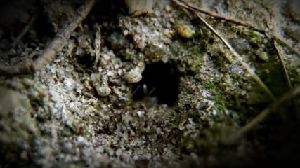 Ants move
