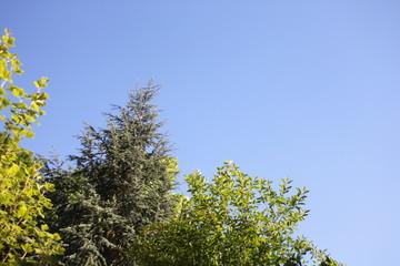 Himmel mit Wald