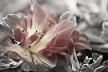 Dzieł sztuki o tematyce zbliżenie tulipany, rozmytymi i ostrych