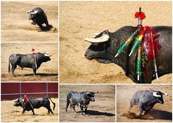 touros