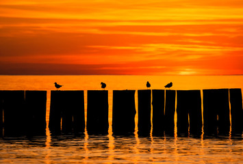 Sun set by the sea with pier and birds silhouettes