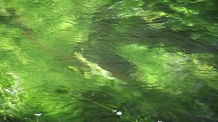 Rivière envahie par le cresson