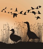 Geese before migrating poster