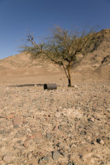 Tree and empty barrel in desert