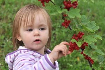 bébé mangeant groseilles