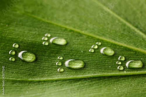 Water footprints on leaf