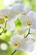 Fototapeten,blume,blume,botanik,dekorativ