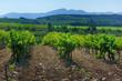 le vin du ventoux
