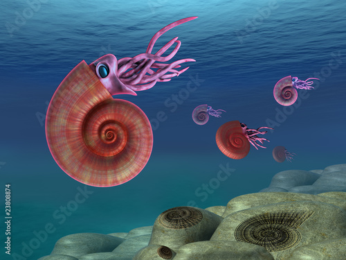 Ammonite seascape - 23808874