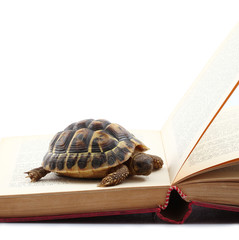 tartaruga e libro