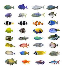 Stora tropiska fiskar samling på vit bakgrund