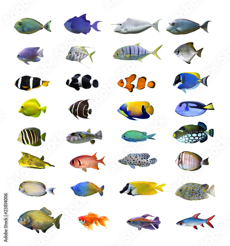 Fototapeta Great tropical fish collection on white background