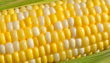 Bi-Color Corn on the Cob