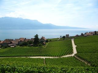Vineyard in Lavaux