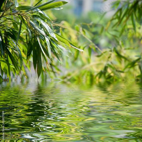 Papiers peints Bambou reflets de feuilles de bambous