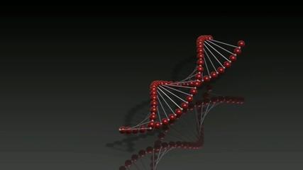SpinDNA
