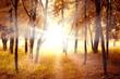 Sunny autumn morning