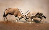 Fototapete Aktiv - Afrika - Säugetiere