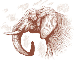 Drawing of Elephant.