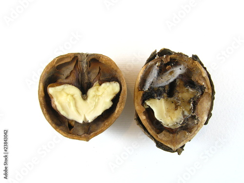 Iinfected walnut besides an healthy one
