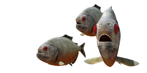 piranha v4