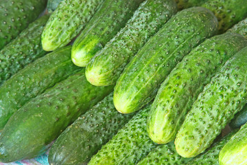 A lot of green cucumbers