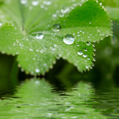 early morning water drops on a leaf with reflection