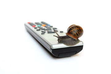 Common garden snail Helix Aspersa on tv remote control isolated
