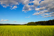 belorussian landscape