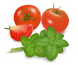 Tomatoes and basil leaves. Photo-realistic vector.