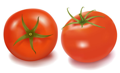 Tomatoes. Photo-realistic vector.