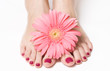 Feet with pink manicure and gerbera