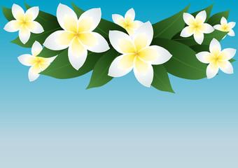 Vector illustration of frangipani flowers over blue sky