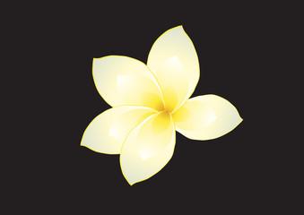 Vector illustration of frangipani on dark background