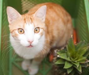 Katze kuckt aus Gemüsekiste heruas