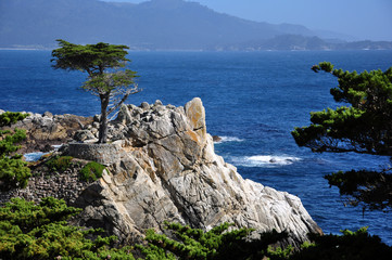 The Lone Cypress in Pebble Beach, 17 Mile Drive, Monterey