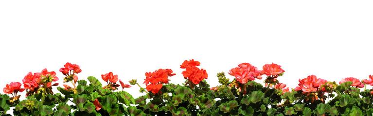 Blumen 142