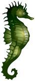 Seahorse, sea fad poster
