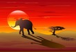 Elefante Africano nel Tramonto-African Elephant on Sunset-Vector