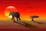 Elefante Africano nel Tramonto-African Elephant on Sunset-Vector