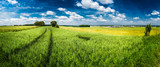 Fototapety Green field panorama