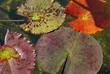 foglie 793