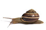 slug poster